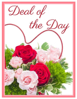 Deal of the Day from Joseph Genuardi Florist in Norristown, PA