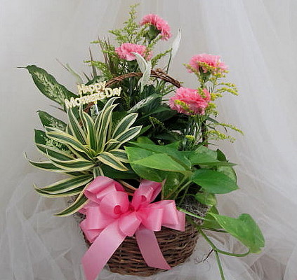 Moms Dish Garden Basket from Joseph Genuardi Florist in Norristown, PA