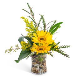 Golden Morning from Joseph Genuardi Florist in Norristown, PA