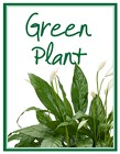 Green Plant Deal of the Day from Joseph Genuardi Florist in Norristown, PA