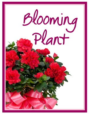 Blooming Plant Deal of the Day from Joseph Genuardi Florist in Norristown, PA