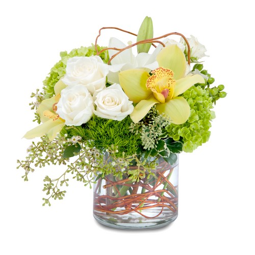 Renewed Promise from Joseph Genuardi Florist in Norristown, PA