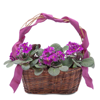 Very Violet Basket from Joseph Genuardi Florist in Norristown, PA