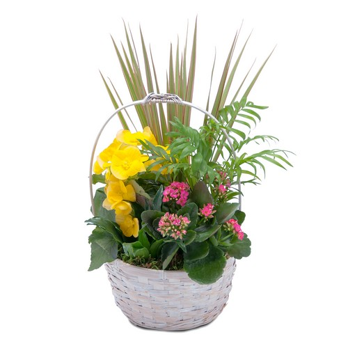 Bloomin' Sunshine Days Basket from Joseph Genuardi Florist in Norristown, PA