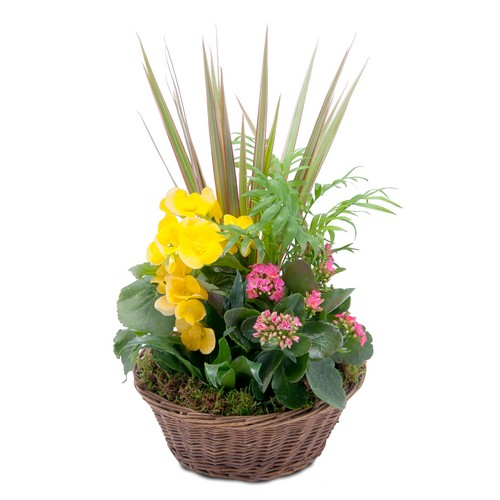 Bloomin' Sunshine Basket from Joseph Genuardi Florist in Norristown, PA