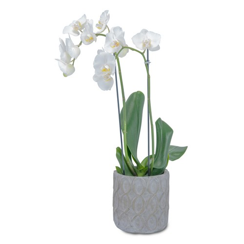White Elegance Orchid from Joseph Genuardi Florist in Norristown, PA