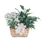 Blooming and Green Plant Combination from Joseph Genuardi Florist in Norristown, PA
