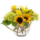 Rays of Sunshine from Joseph Genuardi Florist in Norristown, PA