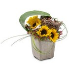 Urban Nest from Joseph Genuardi Florist in Norristown, PA