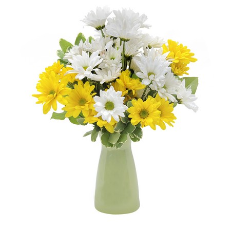 Daisy Crazy from Joseph Genuardi Florist in Norristown, PA