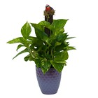 Pothos on Pole in Special Container from Joseph Genuardi Florist in Norristown, PA