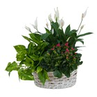 Living Garden Plant Basket from Joseph Genuardi Florist in Norristown, PA