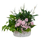 Living Blooming  White Garden Basket  from Joseph Genuardi Florist in Norristown, PA
