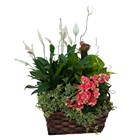 Living Blooming  Garden Basket  from Joseph Genuardi Florist in Norristown, PA
