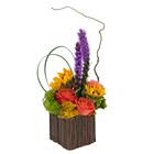 Naturally Bright from Joseph Genuardi Florist in Norristown, PA