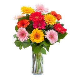 Grand Gerbera from Joseph Genuardi Florist in Norristown, PA