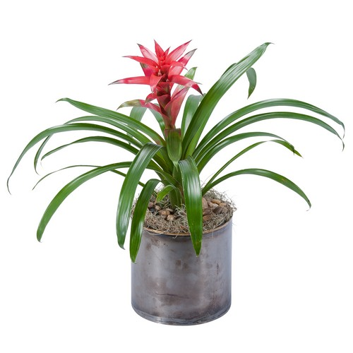 Bromeliad from Joseph Genuardi Florist in Norristown, PA