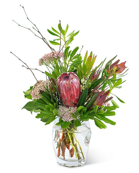 Posh Protea from Joseph Genuardi Florist in Norristown, PA