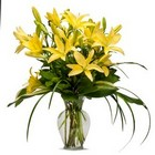 Lily from Joseph Genuardi Florist in Norristown, PA