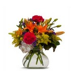 Fever from Joseph Genuardi Florist in Norristown, PA