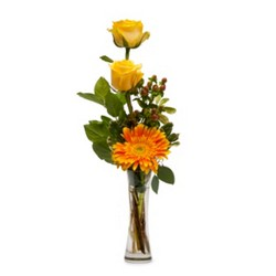 Bring Me Sunshine from Joseph Genuardi Florist in Norristown, PA