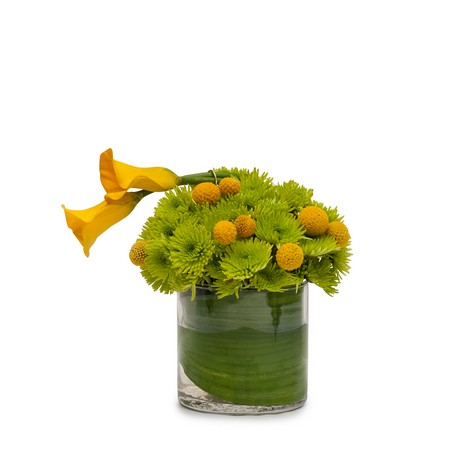 Lemon Lime from Joseph Genuardi Florist in Norristown, PA